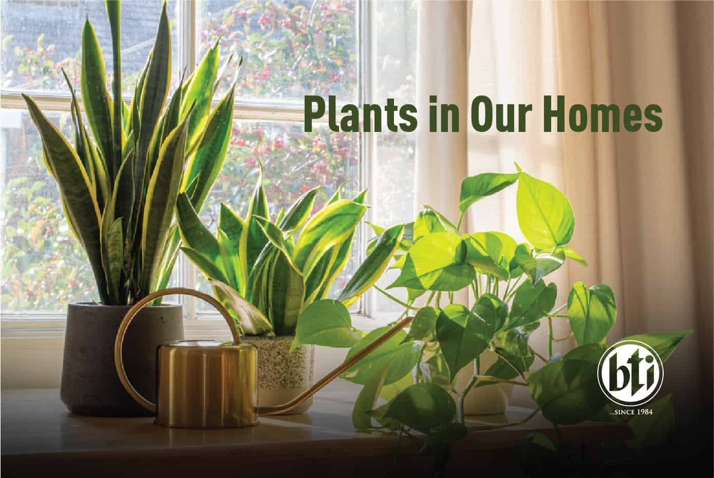 Plants in Our Home